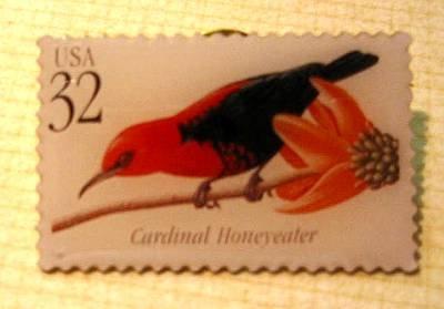 Cardinal Honeyeater Tropical Bird stamp pin lapel 3225