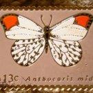 Orange-tip butterfly stamp magnet cloisonne 1715mg