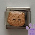 Adorable cream Persian cat Italian Charm