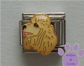 French Poodle Dog Italian Charm Creamy Golden Blond