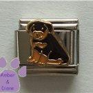 Rottweiler Puppy Italian Charm Rottie Pup