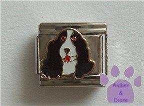 Springer Spaniel Dog Italian Charm Black and White