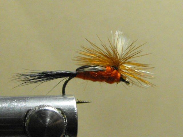 Humpy, Royal - Parachute