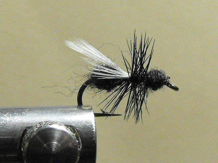 Ant, Black - Winged