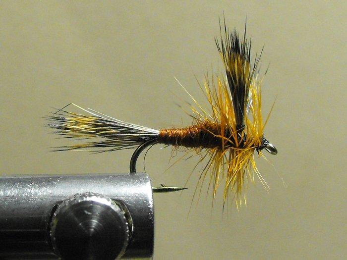 Wulff, Brown - Hair Wing