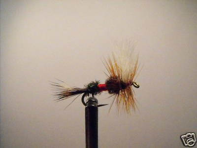 1 Dozen -  Royal Wulff  - Dry Fly -  Assortment