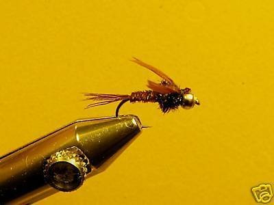 12 Brass Bead Pheasant Tail Nymph Wet Fly Trout