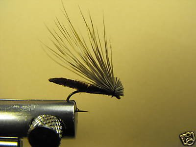 12 Extended Bodied Elk Hair Caddis Dry Fly  Brown