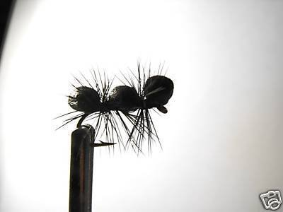 12  Foam Black Carpenter Ant  - Dry Fly -  Assortment