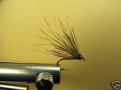12 Extended Bodied Elk Hair Caddis Dry Fly  Pink