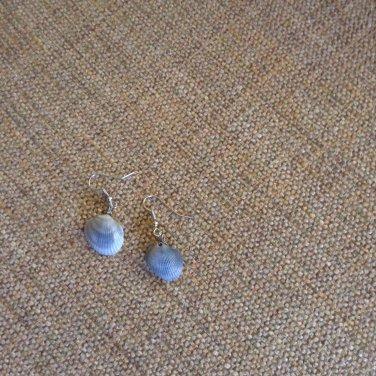 Grey seashell earrings