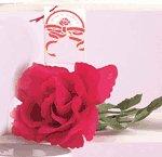 Musical Rose -22534