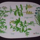 Vera Neuman Placemats (vinyl) Set Of 4