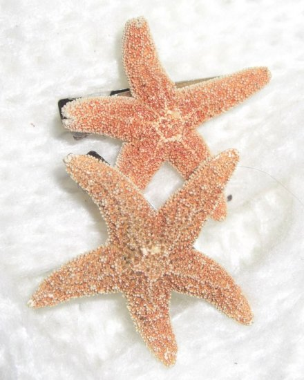 Sea Stars In Your Hair-Clips