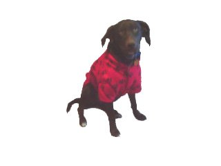 Large Red Paw Coat