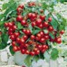 Tumbler Hanging Basket Cherry Tomato Seeds - 50