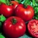Siberian Tomato Seeds - 50