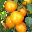 Jubilee Tomato Seeds - 50
