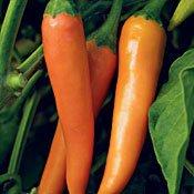Bulgarian Carrot Pepper Seeds (Hot) - 30