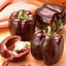 Chocolate Bell (Sweet Beauty) Pepper Seeds- 30