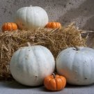 Pumpkin Lumina White Seeds - 25