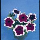 Petunia Hula Hoop Blue Seeds - 30