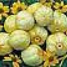 True Lemon Cucumber Seeds - 30