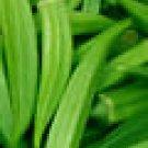 Emerald Okra Seeds - 120