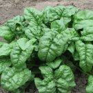 Nobel Giant Spinach Seeds - 300