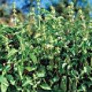Lemon Basil Seeds - 100