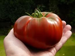 Paul Robeson Tomato (rare) Seeds - 50