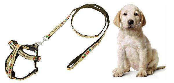 Army Green Color Nylon Dog Pet's Leash Lead & Harness