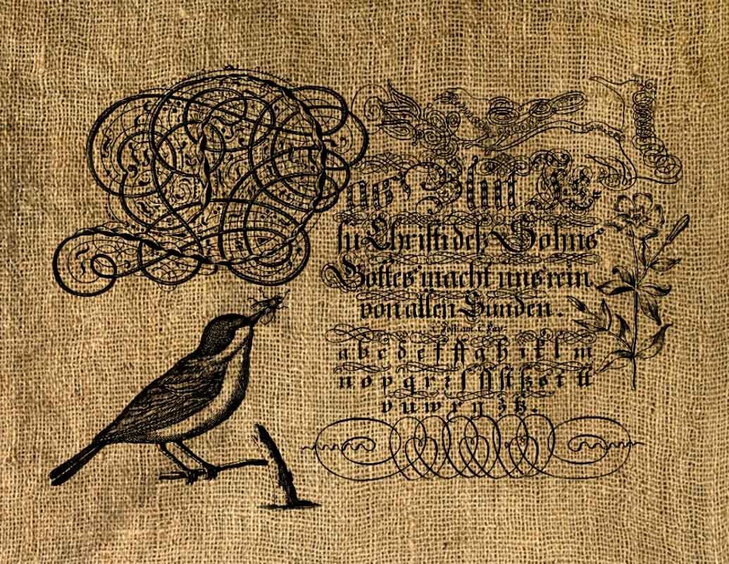 Vintage, Altered, Ephemera, Iron On, Bird Digital Image No.17