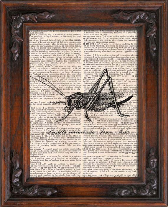 Art Print, GRASSHOPPER, Vintage, Dictionary Page Print 0117
