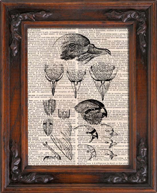 Art Print, Vintage, Birds Anatomical, Dictionary Page Print 0108
