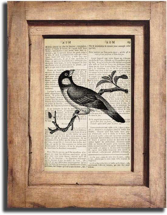Art Print Vintage Bird Dictionary Page Print 0031