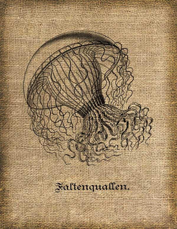 Vintage , JELLY FISH, Medusa, Altered, Printable, Iron On, Ephemera, Digital Image No. 192