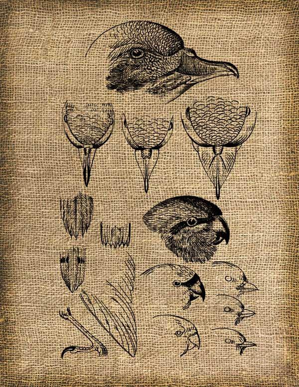 Vintage, Birds, Altered, Iron On, Ephemera, Digital Image No. 193