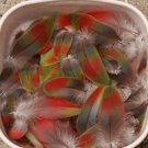 Rainbow Macaw Feathers Parrot Pow Wow Crafts Peyote Kopilli Green Red Blue Bird 130 Piece Lot RARE