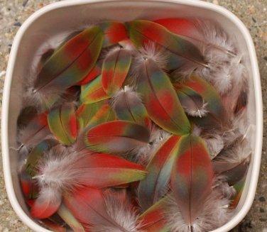Rainbow Macaw Feathers Parrot Pow Wow Crafts Peyote Kopilli Green Red Blue Bird 130 Piece Lot RARE