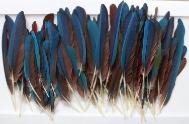 HUGE FEATHER LOT! Macaw Wing/Tail 100 Pieces Peyote Headdress Crafts Pow Wow Blue Green Parrot Bird