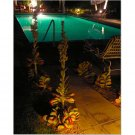 Palm Springs Pool 8x10 photo
