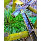 Bamboo Waterway 8x10 photo