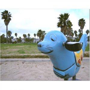 Playground Seal 8x10 photo