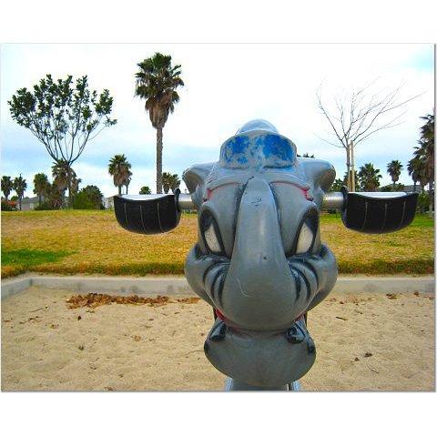Playground Elephant 8x10 photo