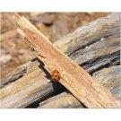 Ladybug 8x10 photo