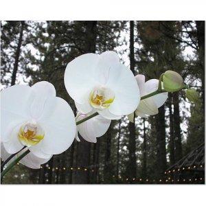White Orchids 8x10 photo