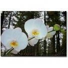 Moth Orchids Magnet