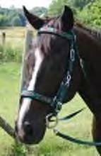 Nylon Heart Western Horse Headstall, Breastcollar, and Reins Set