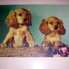 2 cocker spaniel dogs framed Early color photo print AL1060